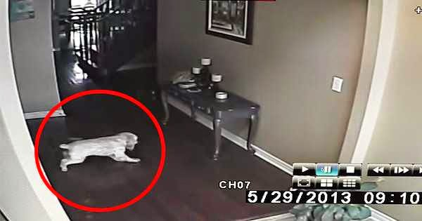 A Man Thought His Home Was Haunted, So He Set Up A Camera. This Is What It Recorded