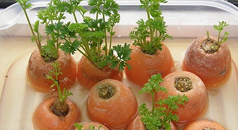 6 Vegetables and Herbs You Can Grow Indoors From Scraps