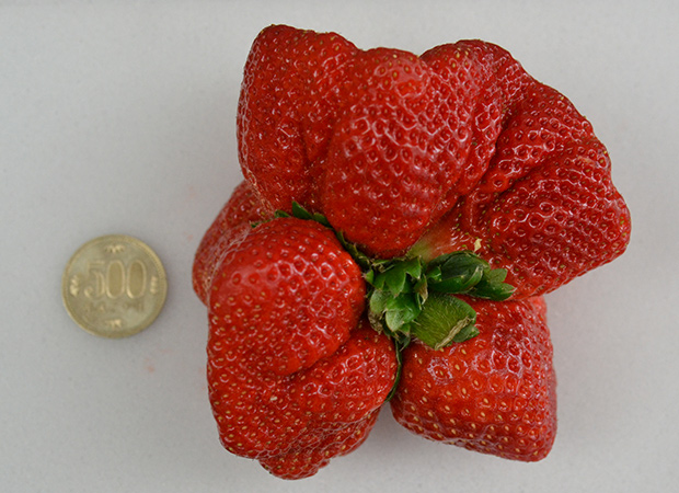 heaviest-strawberry-top-view_tcm25-378934