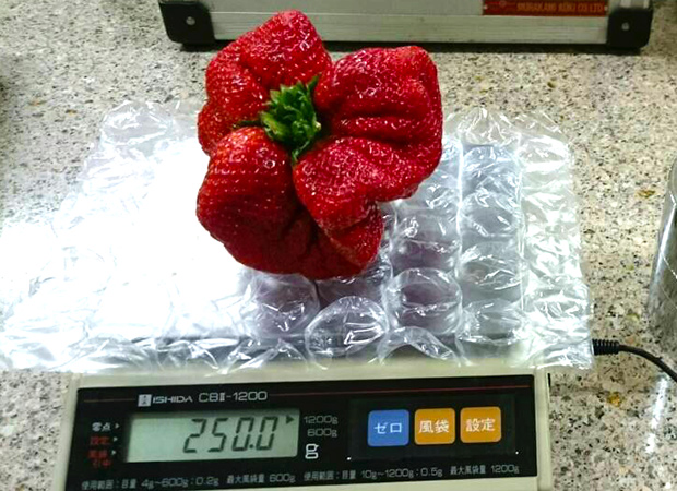 heaviest-strawberry-weighing_tcm25-378935