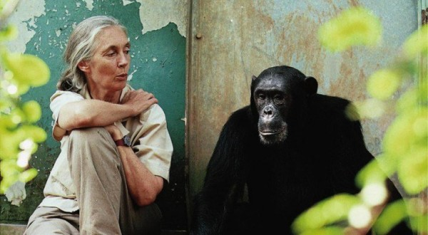 Altered Genes & Twisted Truth: Dr. Jane Goodall Helps Expose The Dangers of GMOs