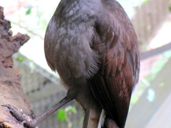 It's Both Amazing & Disturbing: This Bird Mimicked Some Sounds People Were Making