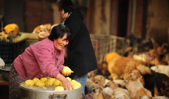 rescued-dogs-yulin-dog-meat-festival-china-10