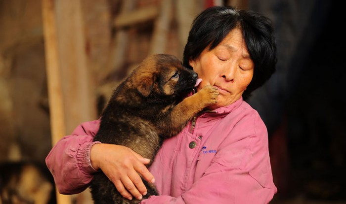 rescued-dogs-yulin-dog-meat-festival-china-19