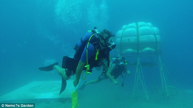 Nemo's Garden Project: Secret Underwater Gardens Off The Coast Of Italy Where Diver-Farmers Are Growing Vegetables