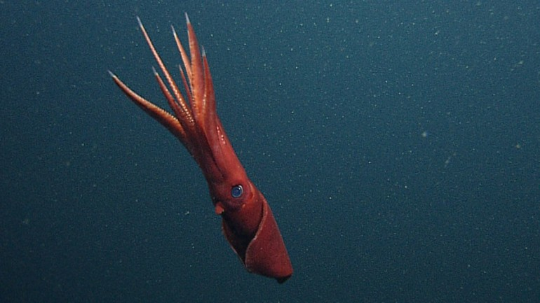 Russian Sailors Struggle With Terrifying Huge Squid