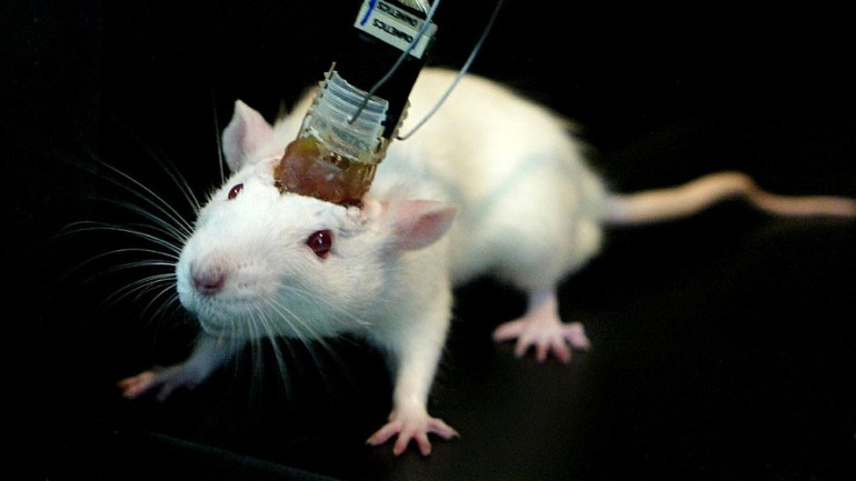 Scientists Wirelessly Control Mice With Brain Implant