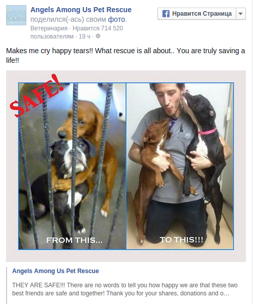 Heartbreaking pic of 2 hugging dogs saves them from being euthanized in US animal shelter — RT News