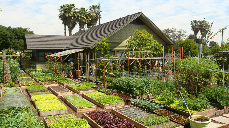 This Tiny Farm Pumps Out 6,000 Pounds Of Food Per Year. But Where It's Located? Shocking