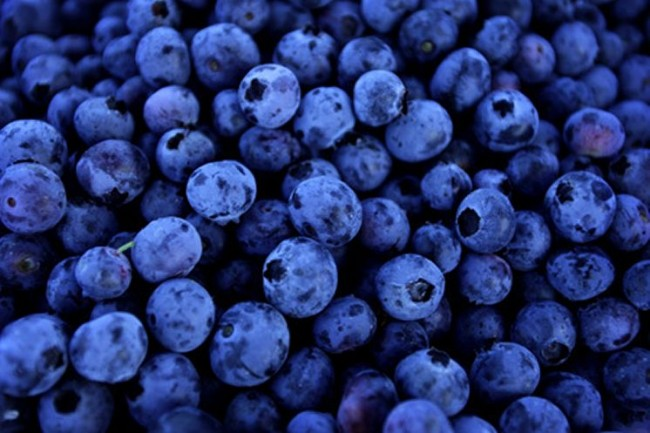 blueberry450_221068a_8col