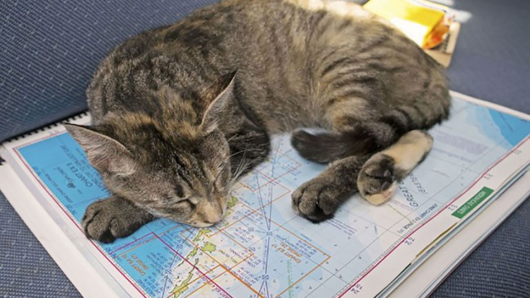 This Couple Quit Their Jobs And Sold Everything, Just To Travel The World With Their Cat
