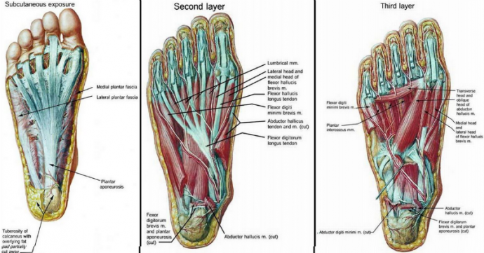 foot-stragthanning-exersises-800-690x361