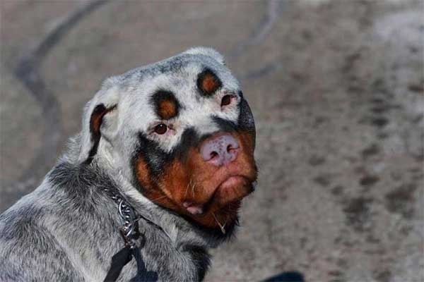 These Dogs With The Most Unique Coats On Earth Took My Breath Away
