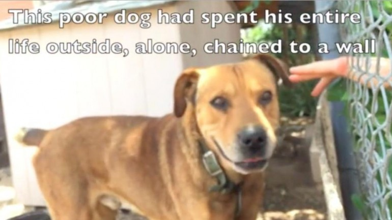 This Vicious Dog Spent His Whole Life Chained. Watch What Happens When A Stranger Removes His Chain
