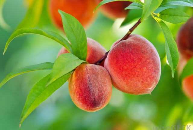 Peaches Make Cancer Cells Commit Suicide