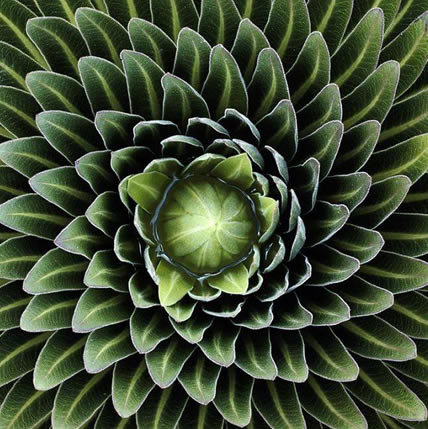 15 Plants That Teach Us Sacred Geometry At Its Finest