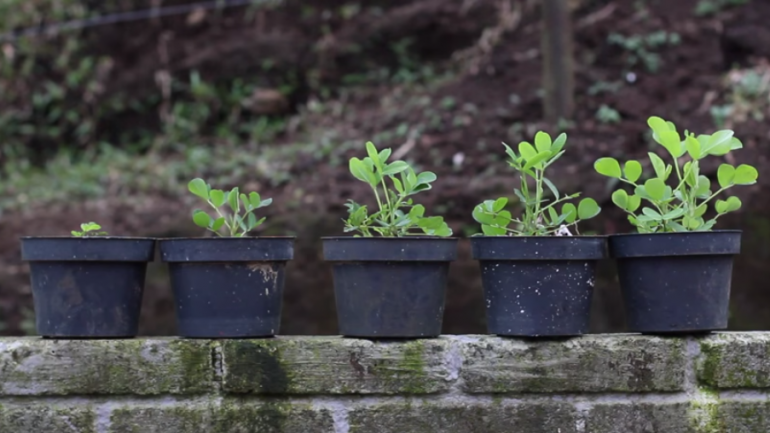 Five Different Soils From Different Parts of the Earth Were Put to the Test. What They Found May Surprise Even The Most Experienced Gardener
