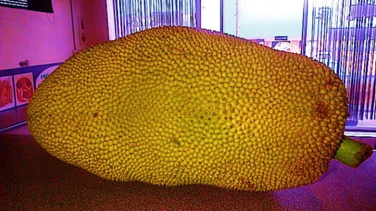 """A 10 Pound """"Miracle"""" Fruit That Smells Like Rotting Onions and Tastes Like Pulled Pork Could Save Millions From Starvation"""