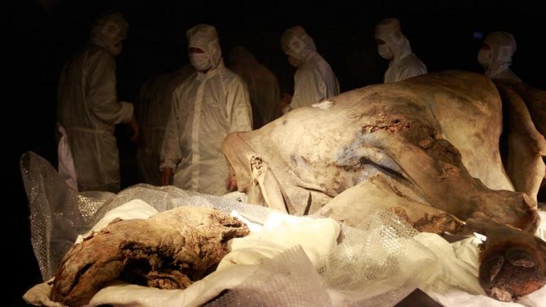 'Jurassic Park'? Siberian Lab Set to Clone Extinct Mammals