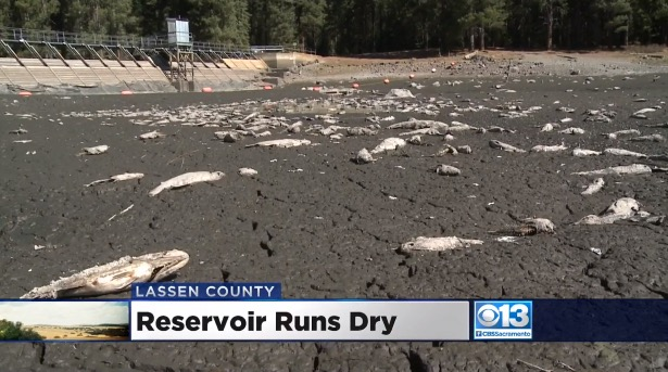 Residents Perplexed After Calif. Lake Mysteriously Goes Dry Overnight Leaving Thousands of Fish Dead