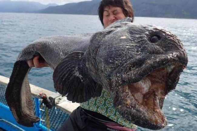 SEA MONSTER: Amazed fishermen catch giant alien fish AN ENORMOUS sea monster with a gargantuan gaping mouth like a car boot has been found lurking in the Pacific Ocean.