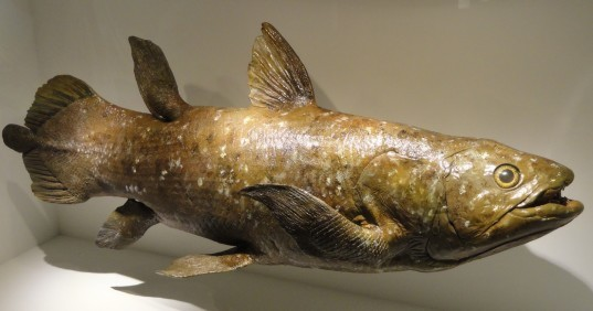Ancient Human-Sized Fish Breathed With Lungs