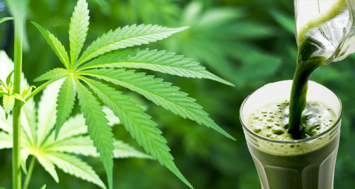 Here's What Raw Cannabis Juice Does For Your Health
