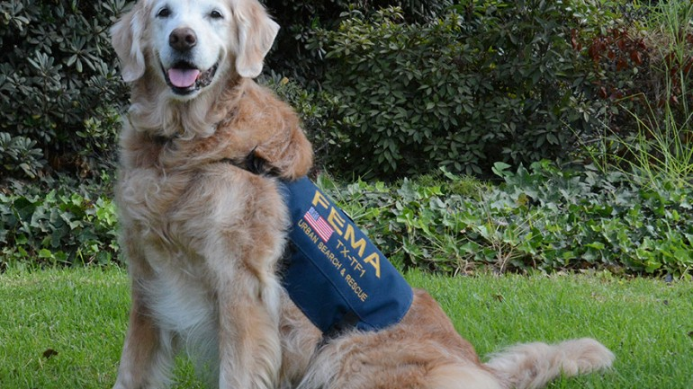 Last Living 9/11 Rescue Dog Honored With Epic Sweet 16 Birthday Party