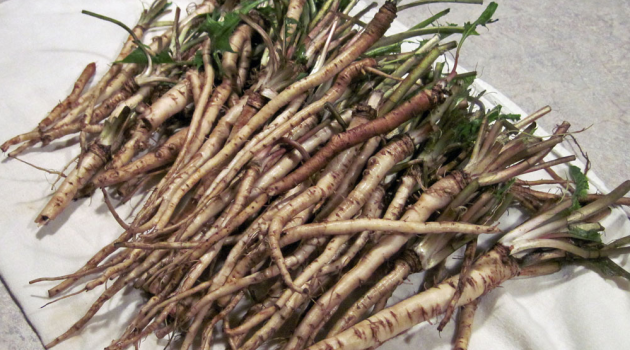 Cancer Cells Decompose After Several Days, With The Use of This Herb