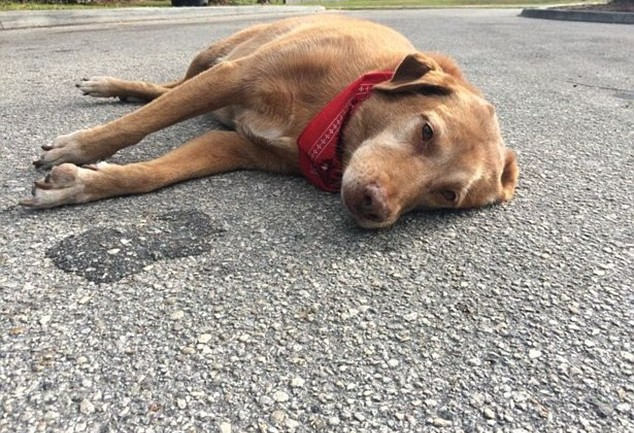 Dog Lies Down in Road For Hours at Spot Where Florida Accident Claims His Owner's Life