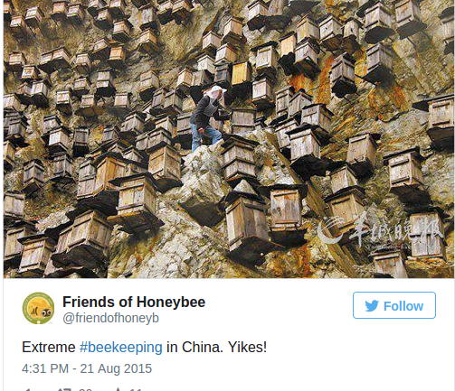 700 Beehives Hang Off This Rocky Cliff to Boost Dwindling Bee Populations