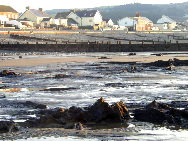 Forest_of_Borth_3