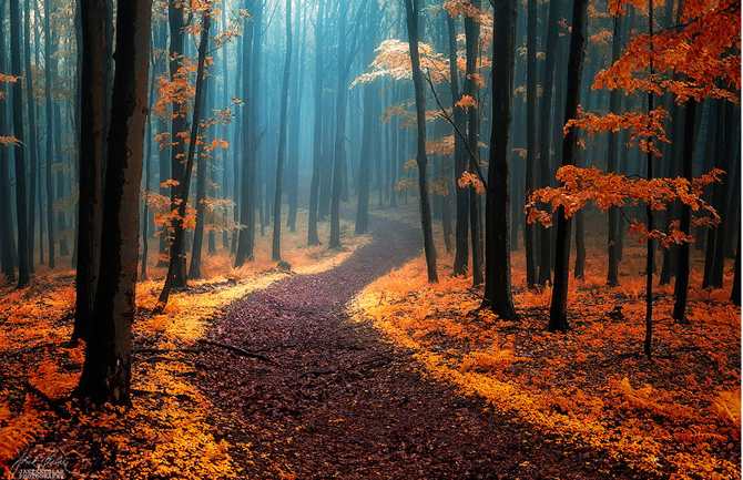 Mystical Forests That Are Ideal For Exploring With Your Friends