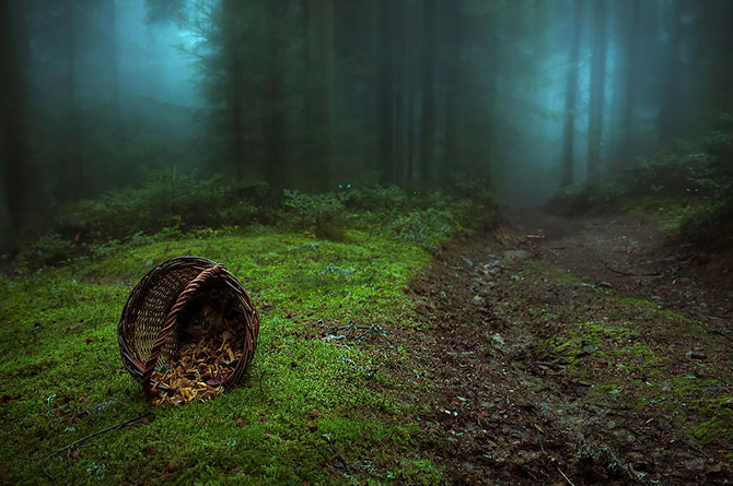 TW_Forest-France21_670