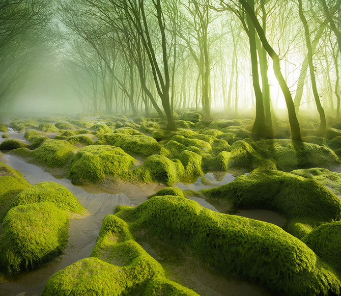 TW_Forest-Moss14_670
