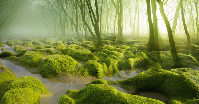 TW_Forest-Moss14_733.png_670