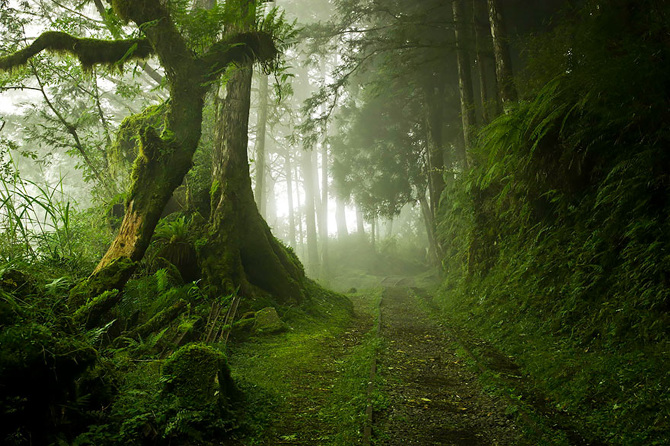 TW_beautiful-mysterious-forests-_670