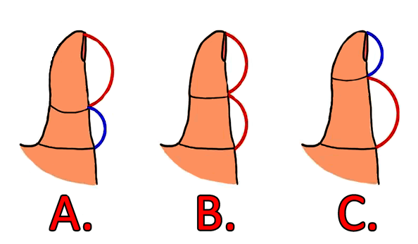The-Length-of-Your-Thumb-Reveals-How-You-Behave-in-Love-Relationships