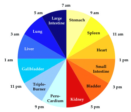 Your Body Has a Built in Clock….This Is Timetable Of The Hours When Your Organs Regenerate