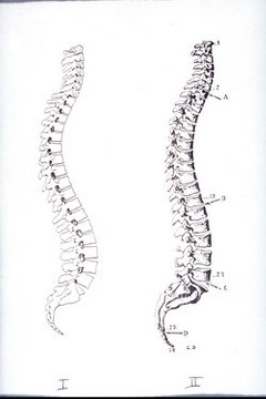 back-pain-spines