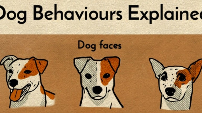 How To Understand What Your Dog Is Trying To Say