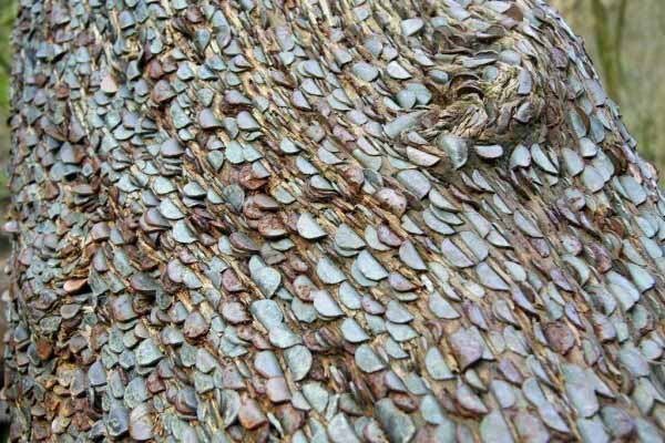 Mysterious Trees Covered With Money In British Forests