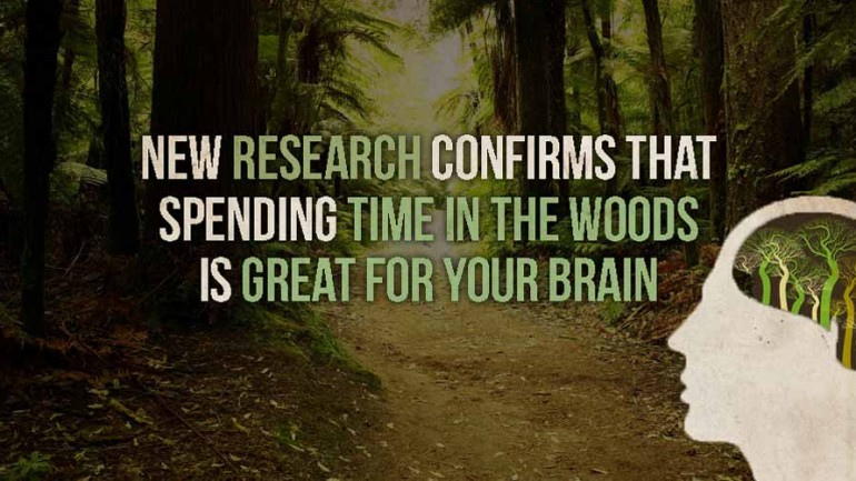NEW RESEARCH CONFIRMS THAT SPENDING TIME IN THE WOODS IS GREAT FOR YOUR BRAIN