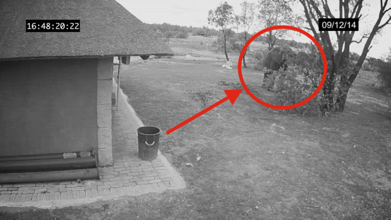 A Hidden Camera Catches An Elephant Doing Something Scientists Have Never Seen Before