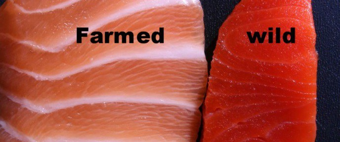 Here's How To Tell If Your Salmon Is Safe