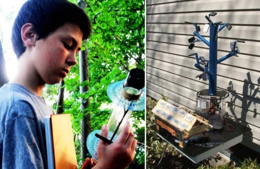 13-Year-Old Inventor Cracks The Secret Of Trees To Revolutionize Solar Energy