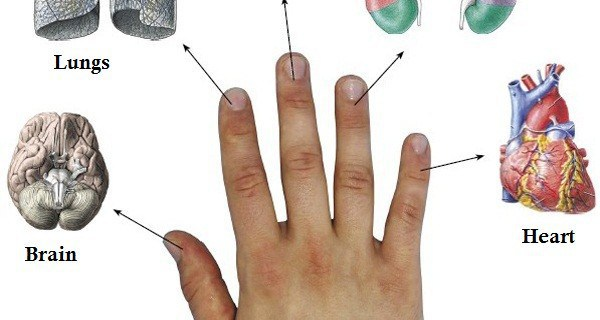 Every-Finger-Is-Connected-With-2-Organs-Japanese-Methods-For-Curing-About-A-5-Minutes