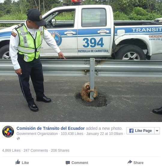 Lost Sloth Knows Just Where To Wait For Help To Arrive