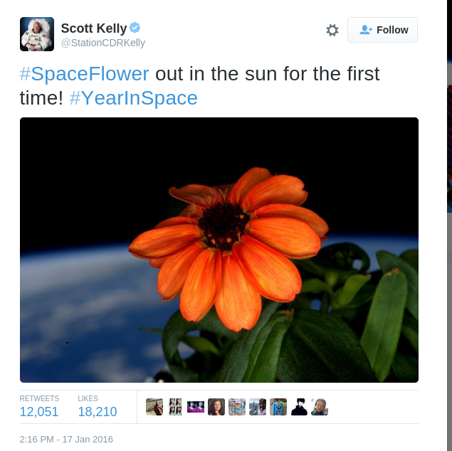 Scott Kelly on Twitter SpaceFlower out in the sun for the first time YearInSpace https t.co Cghu9XGv1J
