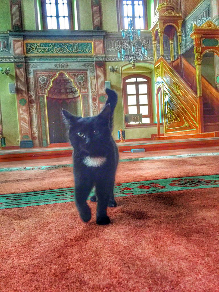 stray-cats-mosque-aziz-mahmud-hudayi-mustafa-efe-istanbul-turkey-10